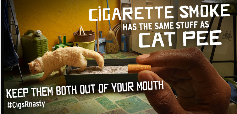 Cigarettes have the same stuff as cat pee in them